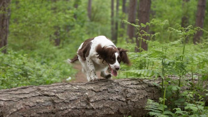 What Is a Natural Mosquito Repellent for Dogs?