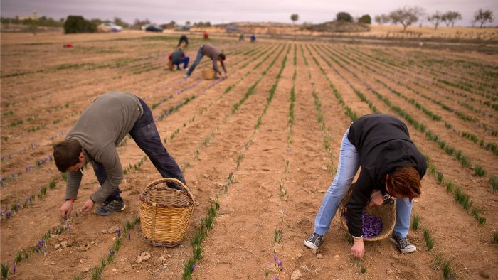 What Are the Natural Resources of Spain?