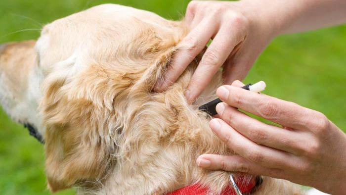 What Is a Natural Way to Get Rid of Ticks?