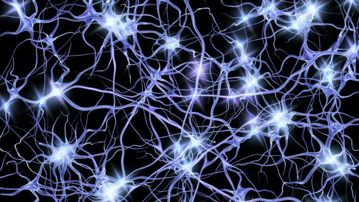 How Do Neurons Transmit Electrical Impulses?