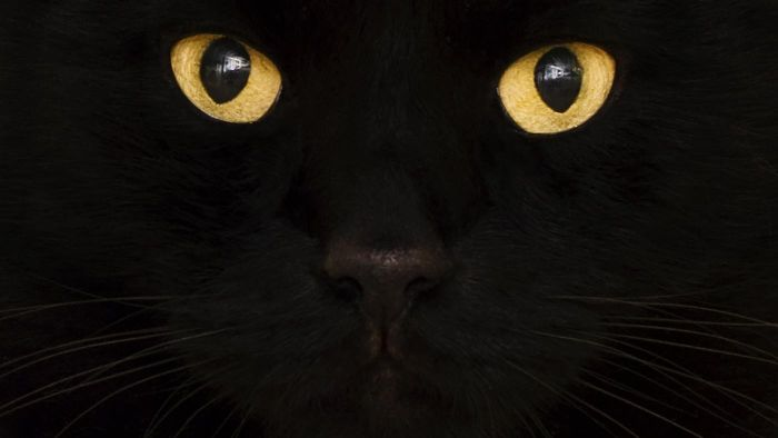 What does a nictitating membrane mean in a cat?