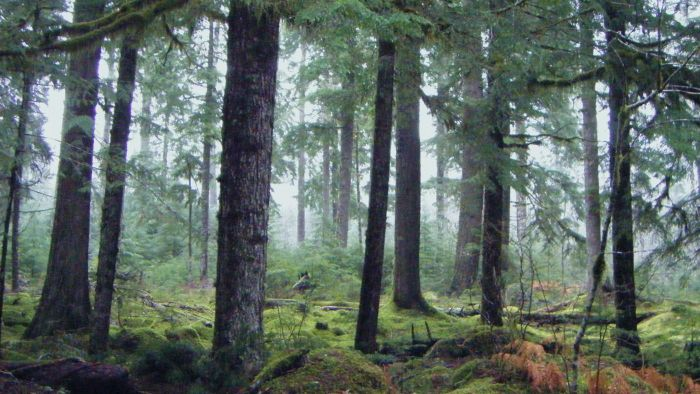Where is a Northwestern coniferous forest?