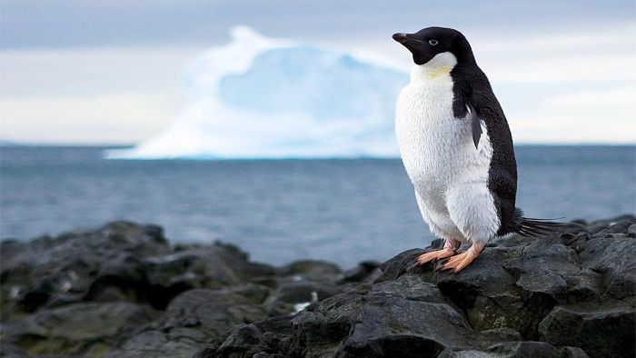 What Ocean Surrounds Antarctica?