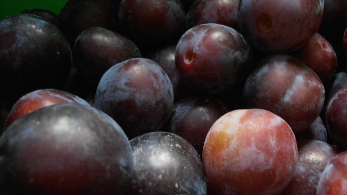 Is It Okay to Freeze Plums?