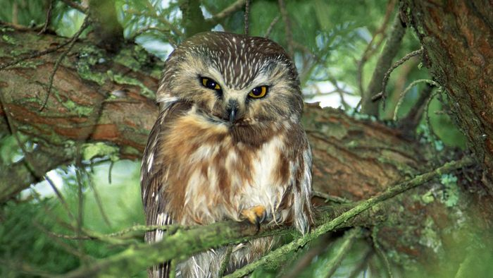 What Does an Owl Symbolize?