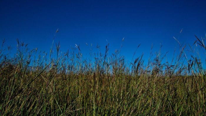 What Do the Pampas, Prairies, Steppes and the Highveld Have in Common?