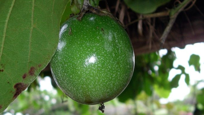 Where Does Passion Fruit Come From?