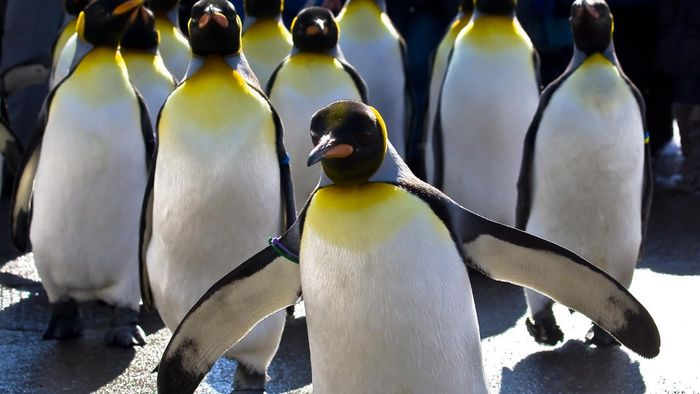 How Do Penguins Behave?