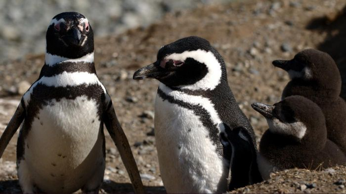 Do Penguins Live in the Tundra Biome?