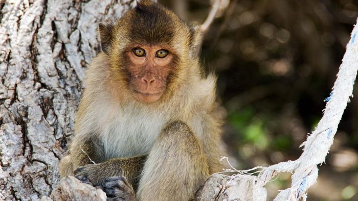 What Is a Physical Description of a Monkey?