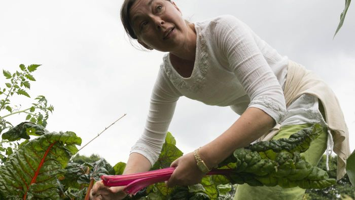 Where is the best place to plant rhubarb?