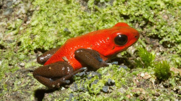 What Do Poison Dart Frogs Eat?