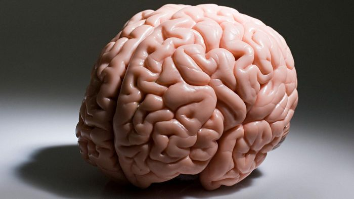 Which Portion of the Brain Is Responsible for Higher Thought Processes, Such As Logical Thinking?
