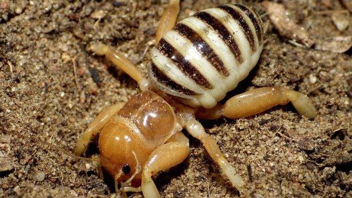 Are Potato Bugs Poisonous?