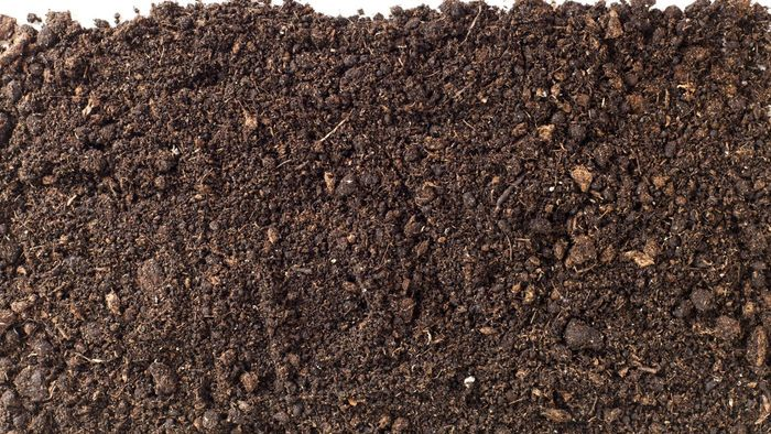 What Causes Potting Soil to Grow Mold?