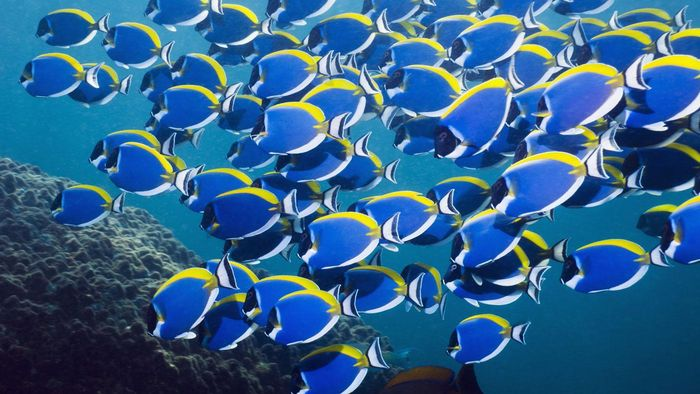 How Many Fish Are in the Sea?