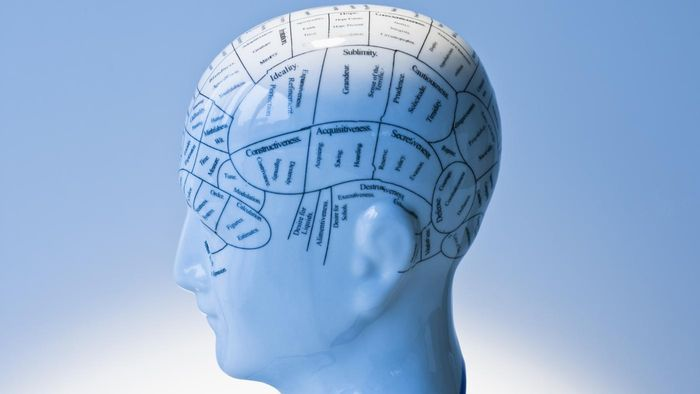 Which Presumed Functions Did Phrenology Highlight?