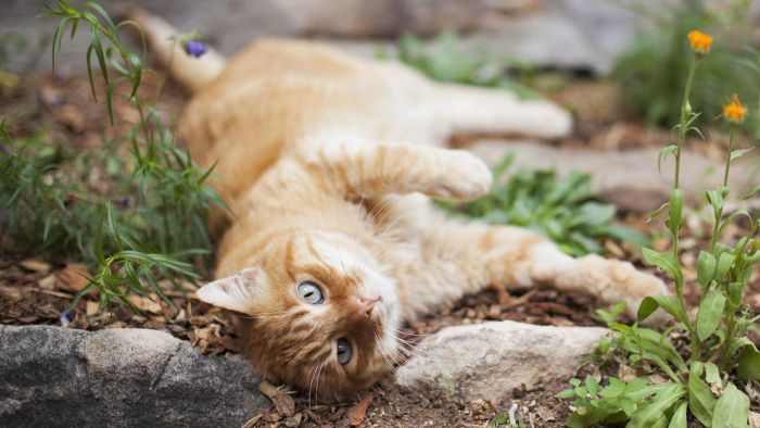 How Do You Prevent Cats From Damaging a Garden?