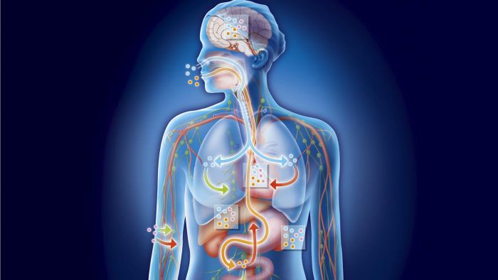 What is propulsion in the digestive system?