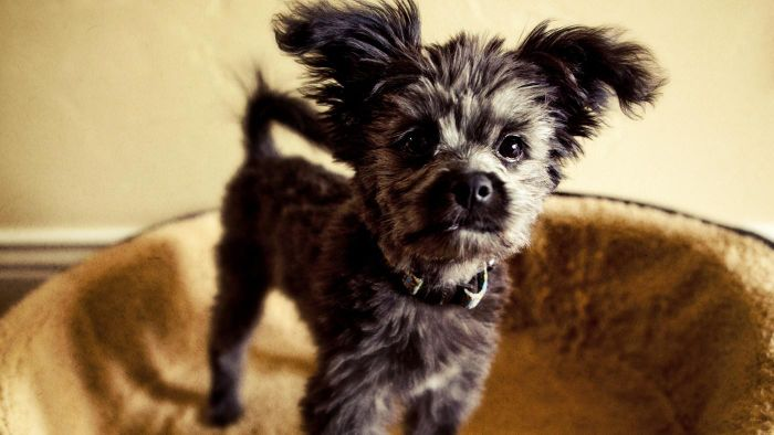 What Are the Pros and Cons of Neutering a Dog?