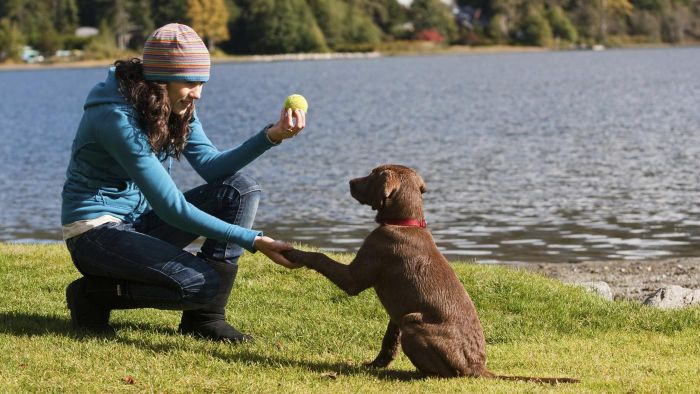 What Is Puppy Obedience Training?