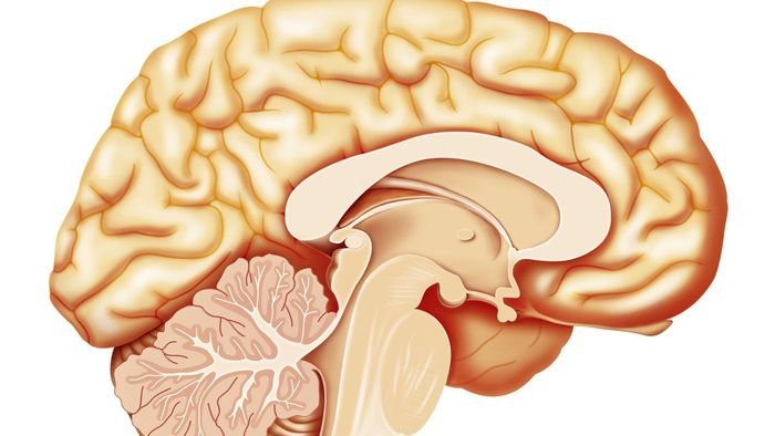 What is the purpose of the cerebellum?