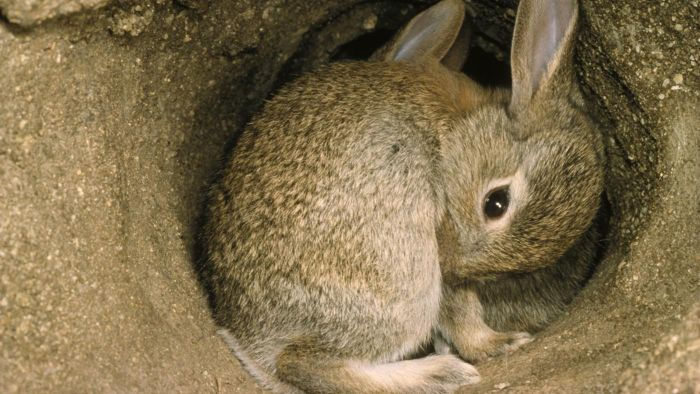 what does a rabbit burrow look like reference com rh reference com Rabbit Burrow in the Poster Rabbit Life Cycle Diagram