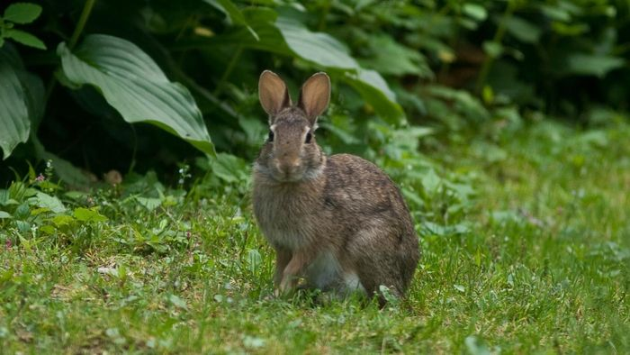 How Are Rabbits Adapted to Their Habitat?