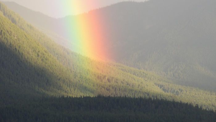 Why Are Rainbows Curved?