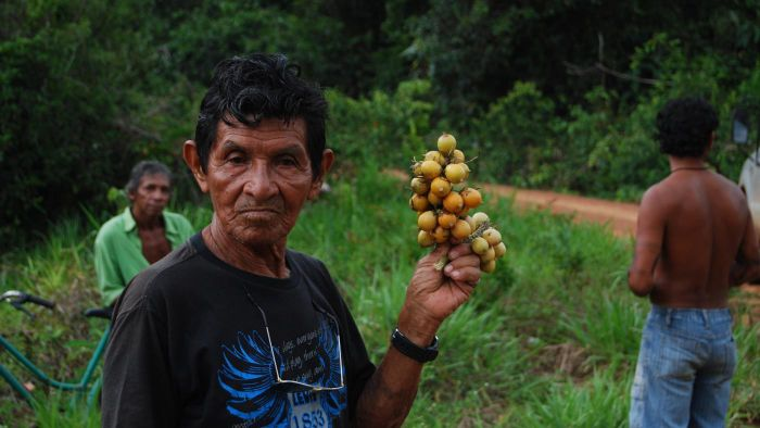 What Do Rainforest Tribes Eat?