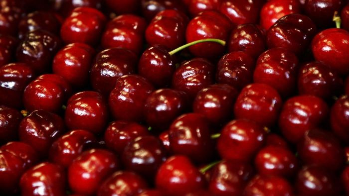 Is There a Relationship Between Cherries and Gout?