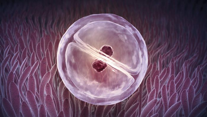 What is the relationship between mitosis and cancer?