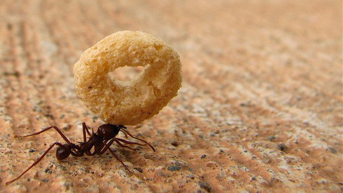 How Do You Get Rid of Ants?