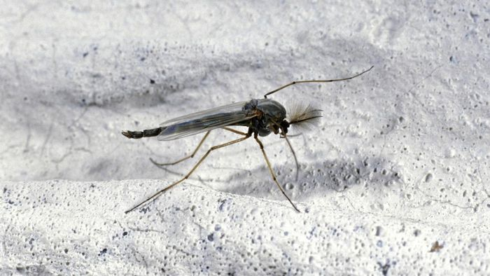 How do you get rid of gnats?