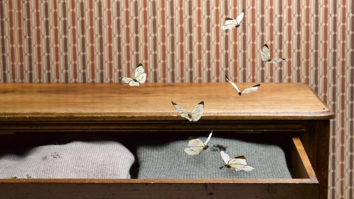 How Do You Get Rid of Moths in a Closet?