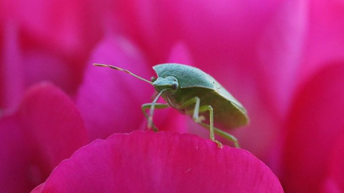 How Do You Get Rid of Stink Bugs?