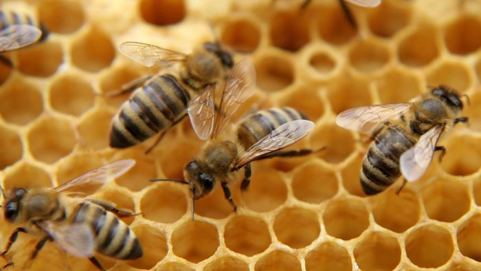 What's the First Aid Treatment for a Bee Sting Allergy?