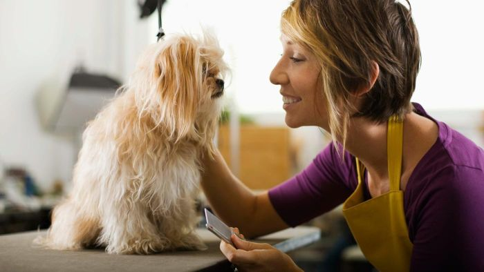 What Is the Salary of a Pet Groomer?
