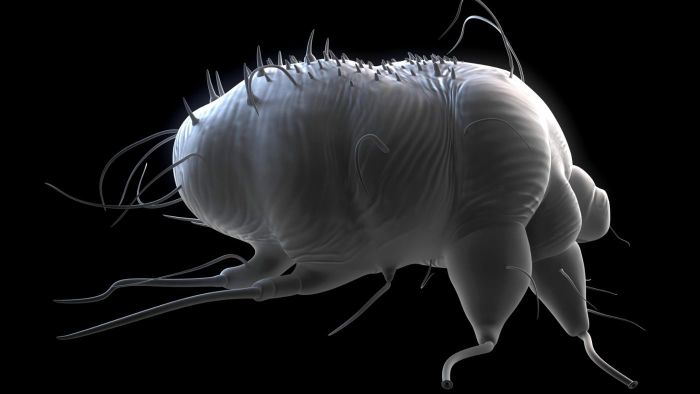 Where Do Scabies Mites Come From?