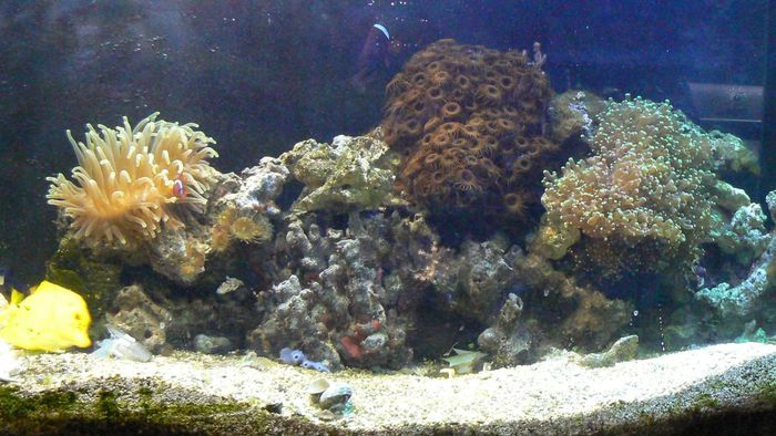 How Do You Set up a Reef Tank?