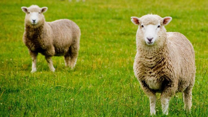 What Is Shearing?