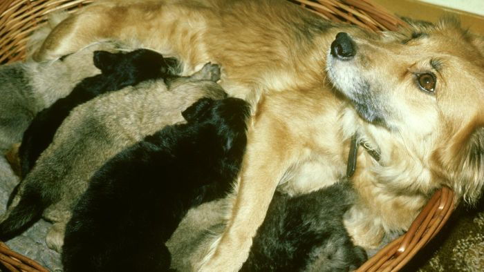 What Should You Do for a Dog That Just Had Puppies?