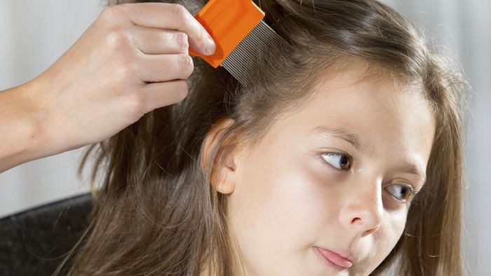 Should Photographs of Head Lice Be Shown in School During Health Class?