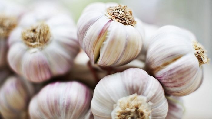 How and when should you plant garlic?