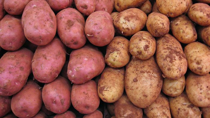 When Should You Plant Potatoes?