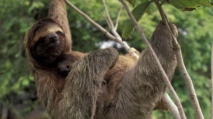 What Are Some Facts About Sloths?