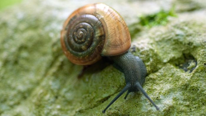 How Do Snails Breathe?