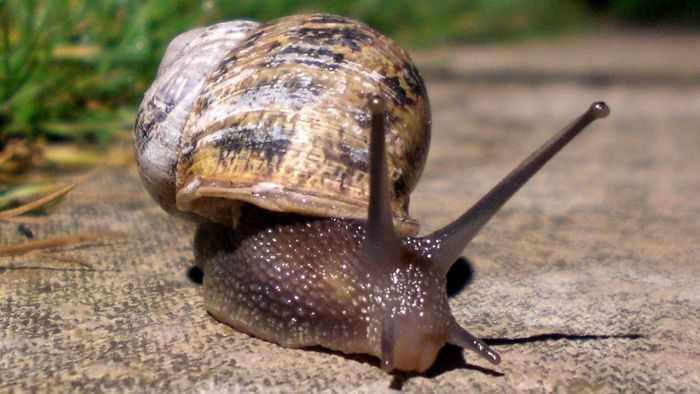 Do Snails Make Noises?