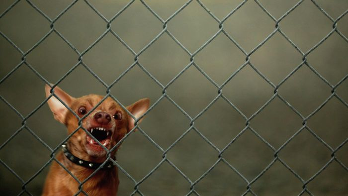What Are Some Solutions to the Problem of a Barking Dog?
