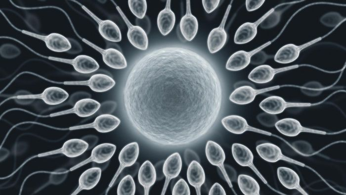 How is sperm made?